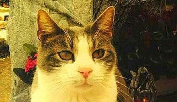 gatto toldo