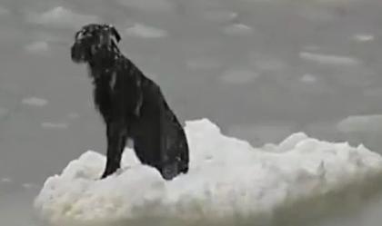cane bloccato sul ghiaccio