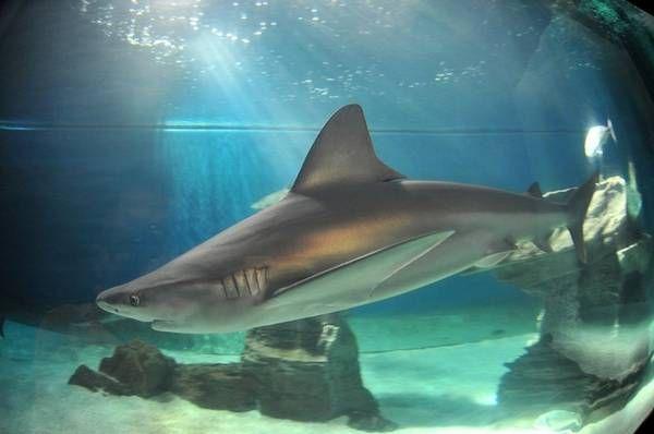 Acquario di Genova: la vasca degli squali