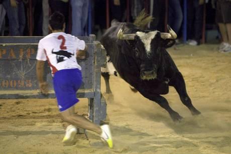 File bull Raton dies