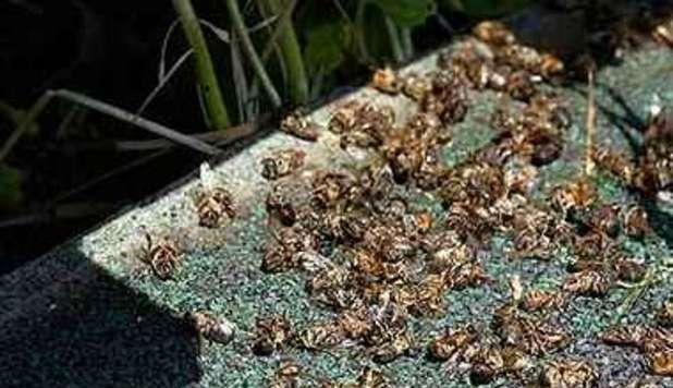 api morte negli stati uniti
