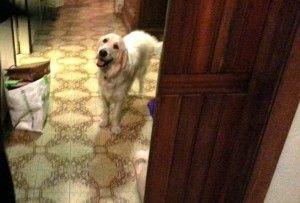 cane salva condominio da esplosione