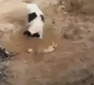 cane seppellisce cucciolo morto