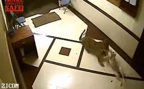 leopardo sbrana cane mumbai india